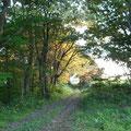 神秘的なうずまき畑への入り口も、美しく紅葉してきました。