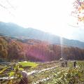 清々しい秋晴れ。収穫は続く。