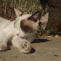 ギリシアのメテオラでお眠なネコ。