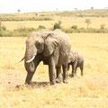 ケニア・マサイマラのゾウの親子。