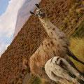 ボリビアとチリの国境付近にいた、どっちだ?アルパカかリャマか?