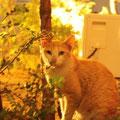 ソウルの宿の表にいたネコ。