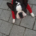 ベルギーのブリュッセルにいた服を着たイヌ。