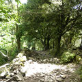 Toojours en forêt