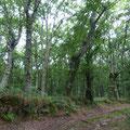 De beaux sentiers entourés de chênes