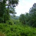 Une végétation luxuriante dans les montagnes