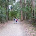 Sur cette étape, beaucoup de forêts