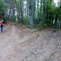 La forêt  d'Eucalptus