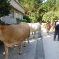 Le troupeau est prioritaire