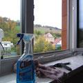 Fenster werden geputzt