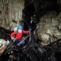 les troncs d'arbres envahissent la grotte - Cueva Farallones de Gran Tierra de Moa