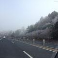 千代田に向かう高速道:霜で樹木が真っ白