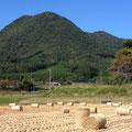 ①龍頭山と稲刈り後の田んぼ