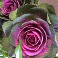 【葉ボタン】お正月の寄せ植えに欠かせない色鮮やかで極寒に強い花♪