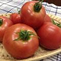 豊平産の完熟トマト