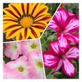 オエチュニアなど色鮮やかなお花でいっぱい❤