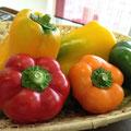 パプリカやセニョリータ?色鮮やかな野菜が届きました!!