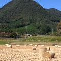 10月:稲刈りを終え飼料となる藁の束が趣のある初秋
