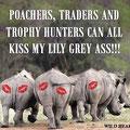 Il messaggio dei nostri amici della savana.