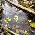 Blätter im See 1