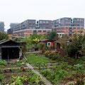 Familiengartenareal Flurstrasse Ost in Zürich Albisrieden Foto-Marlen Tinner