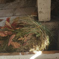 Das Igelnest wurde vorsichtig entfernt und der schlafende Igel in einen vorbereiteten Transportkorb gelegt