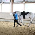 Cavallo und Regina