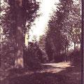 1925 - Bois du Saint-Sépulcre