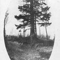 1925 - Bois de Baudémont