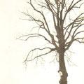 1er avril 1930 - l'arbre de Sainte-Gertrude à Monstreux