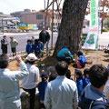 【枯れた潮止め松と苗木の移植式の様子】