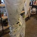 花と墨と和紙のインスタレーション 夢二オマージュ