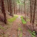 Der Weg zum Oksen