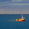Fischer mit reichem Fang - von Möwen begleitet - kehrt heim.