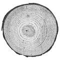 Il legno - Introduzione