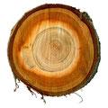 Il legno - Processo di produzione