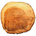Il legno - Derivati