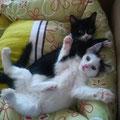 Ruh und Lotte
