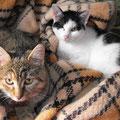 Chrystal und Pepino