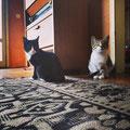 Sinaya und Tasha