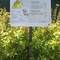 Ville de Genève | Parc animalier du Bois de la Bâtie | panneau de volière | illustrations: Nicole Conus
