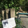 Ville de Genève | Parc animalier du Bois de la Bâtie | panneau d'enclos | illustrations: Nicole Conus