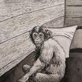 Chimpanzée - Encre de chine