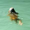 kleines Äffchen im Wasser