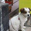 einer von vielen Hunden