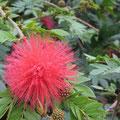 andere scöne Pflanzen