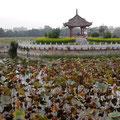 Teich mit Lotuspflanzen - im Pavillion musiziert ein einsamer? Mann