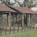 im Gelände befinden sich normalerweise nur weibliche Elephanten