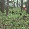 hier werden sehr seltene Pflanzen im Urwald vermehrt.