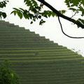 noch eine schöne Reis-Terrasse